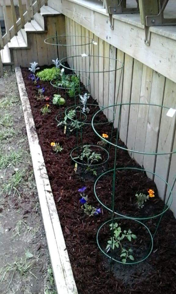 Tomato and herb garden